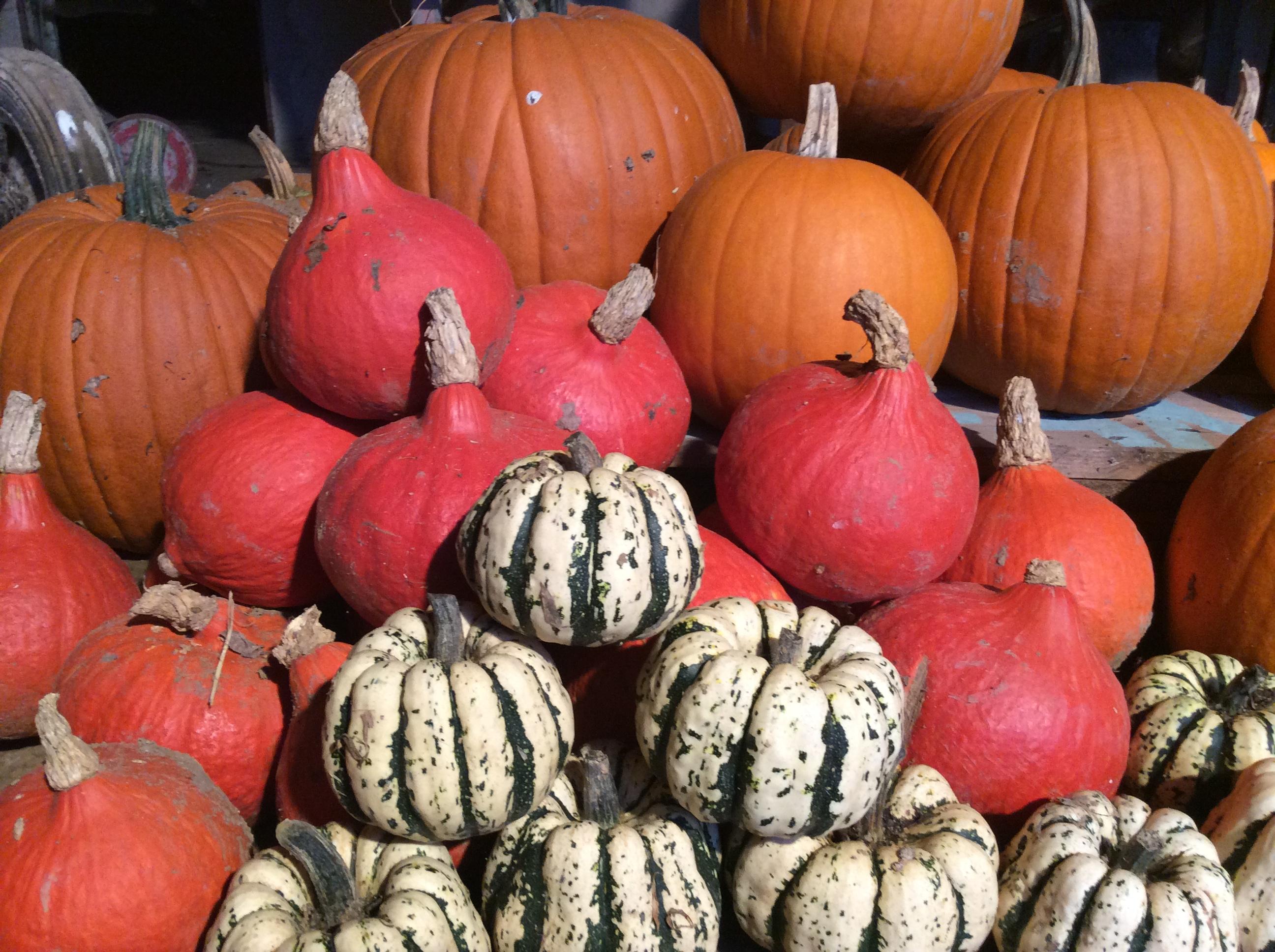 Vente de courge et citrouille halloween à la ferme du Perré dans la Marne et l'Aube
