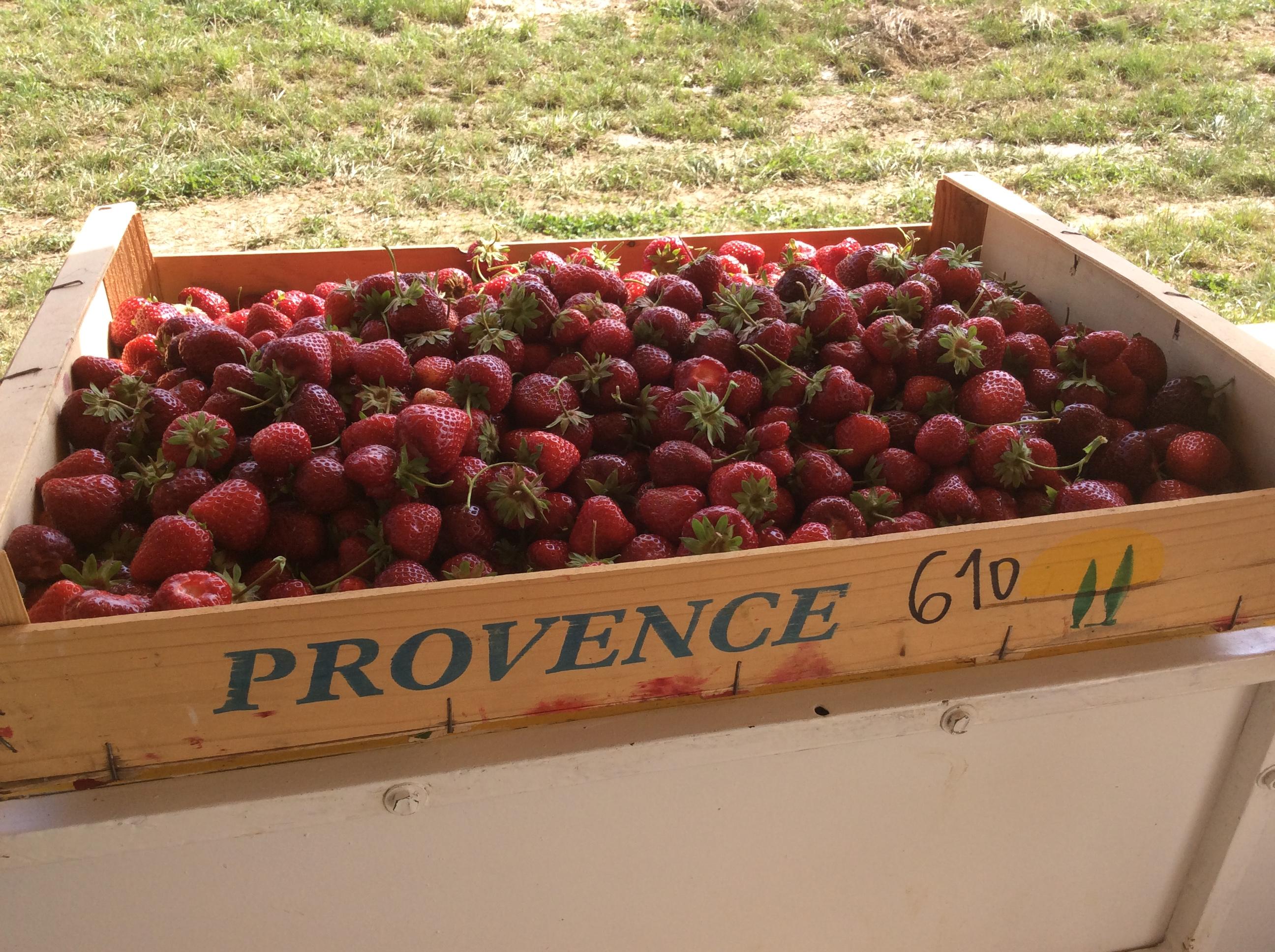 Cueillette de fraise Aube, Marne, Seine et Marne