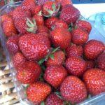 Vente de fraise mara des bois