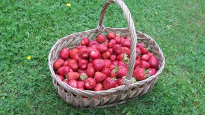 Panier de fraise daroyale