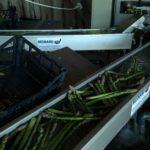 Vente asperge verte à la ferme 51