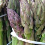 Asperges vertes vente marchés Seine et Marne, Aube