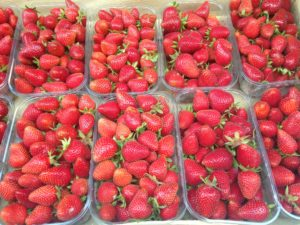 Vente de fraise Marne, Aube, Seine et Marne, 51, 10, 77