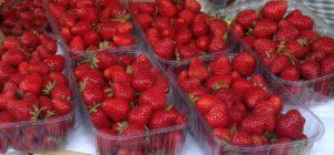 Vente de fraise Romilly sur Seine, Provins, Bray sur seine