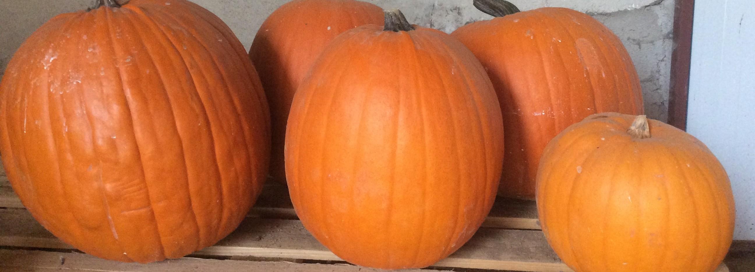 Vente Citrouille halloween
