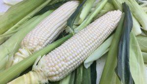 Maïs doux blanc, La ferme du Perré, producteur France
