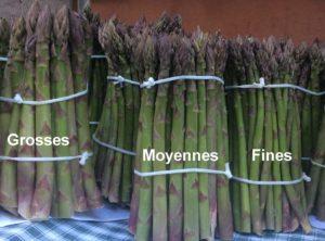 La Ferme du Perré, producteur asperges vertes, Escalavooles, Marne, 51